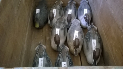 15K24960-968  9 DUCK DECOYS.jpg