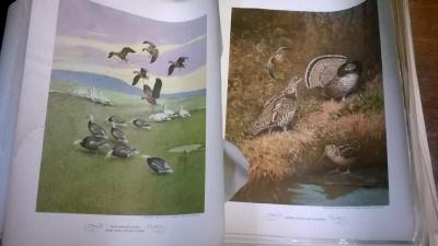 15K25091 GAME BIRDS OF AMERIC (2).jpg