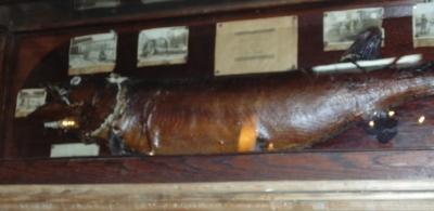36 83108 FISH MOUNT IN MUSEUM CASE (1).JPG