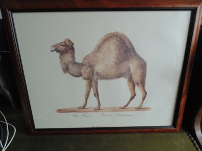 14a27753 Camel engraving.JPG