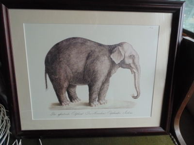 14a27755 Elephant engraving.JPG