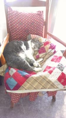 RANDOM CAT.jpg