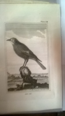 14K24320 18TH CENTURY BIRD ENGRAVINGD (1).jpg