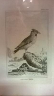 14K24320 18TH CENTURY BIRD ENGRAVINGD (3).jpg
