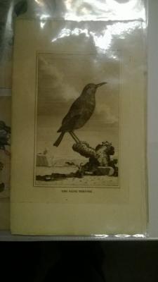 14K24320 18TH CENTURY BIRD ENGRAVINGD (4).jpg