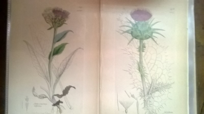 14L03300 EARLY 18TH CENTURY BOTANICAL ENGRAVINGS-HAND COLORED (9).jpg
