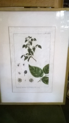 15H BOTANICAL PRINTS (1).jpg