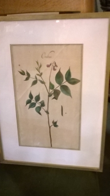 15H BOTANICAL PRINTS (3).jpg