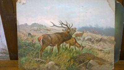 15K24530 UNFRAMED ELK WITH DOE PAINTING.jpg