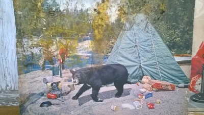 15K24553 BLACK BEAR AT THE CAMPGROUND.jpg