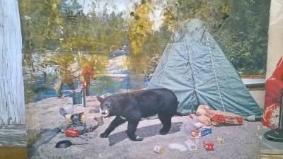 15K24553 BLACK BEAR AT THE CAMPGROUND.jpg
