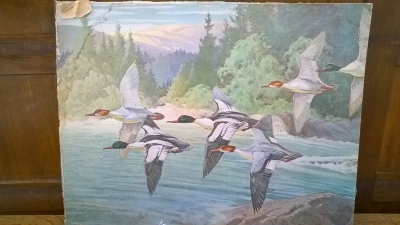 15K24554 UNFRAMED 6 FLYING MALLARD DUCKS.jpg