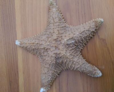 15K24752 STARFISH.jpg